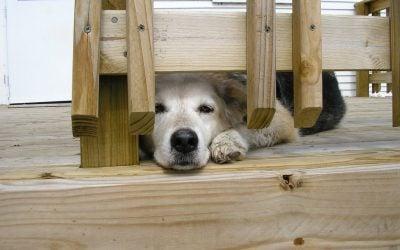 In Memorium: Snickers Dog